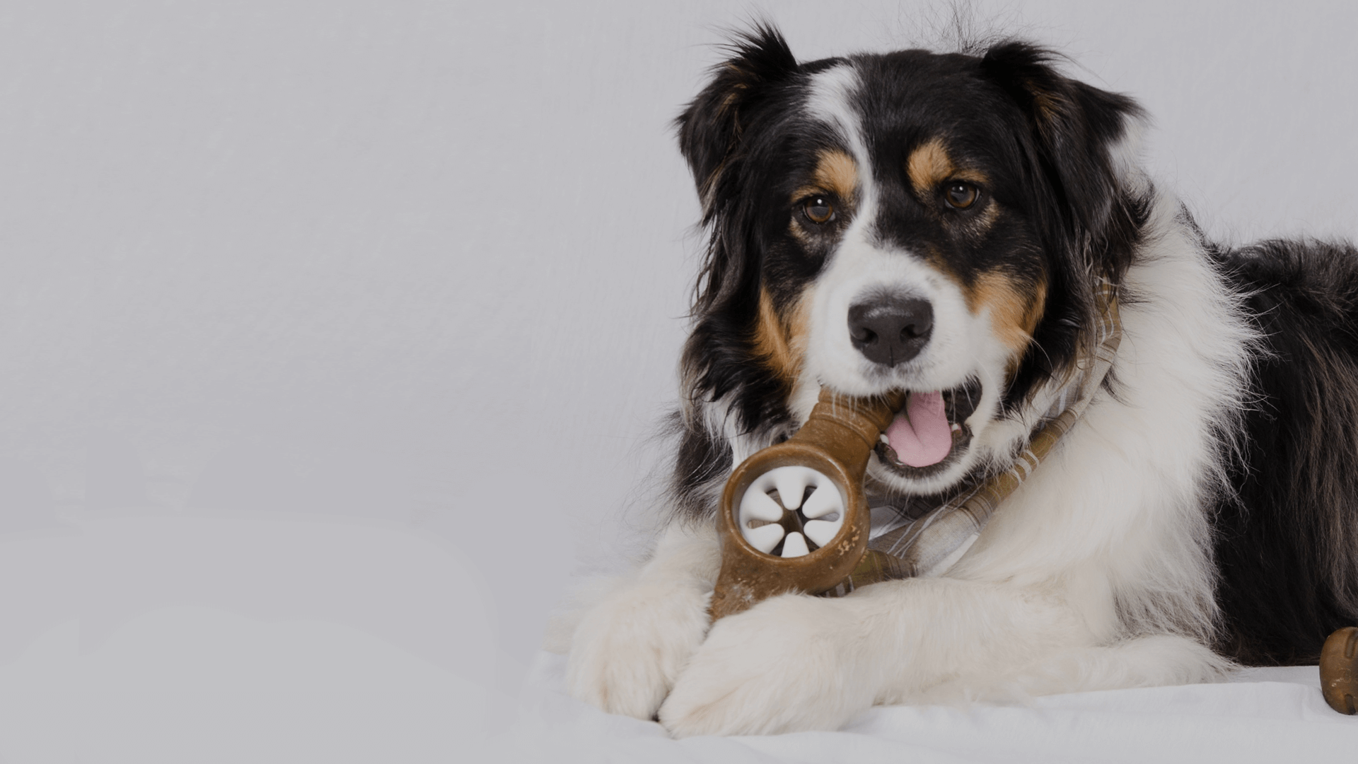 Introducing the Benebone Pawplexer