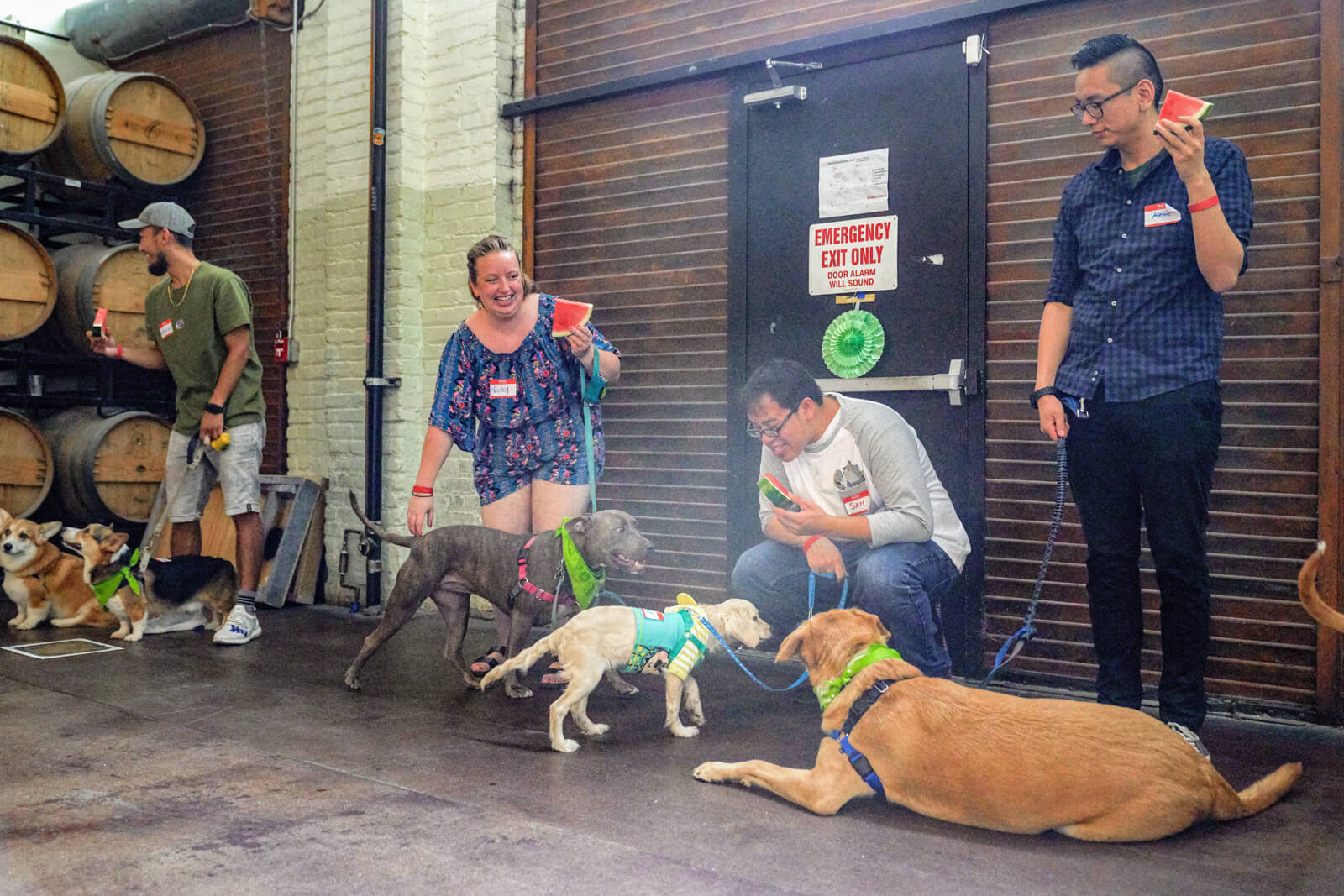 Multiple dogs with owners at event