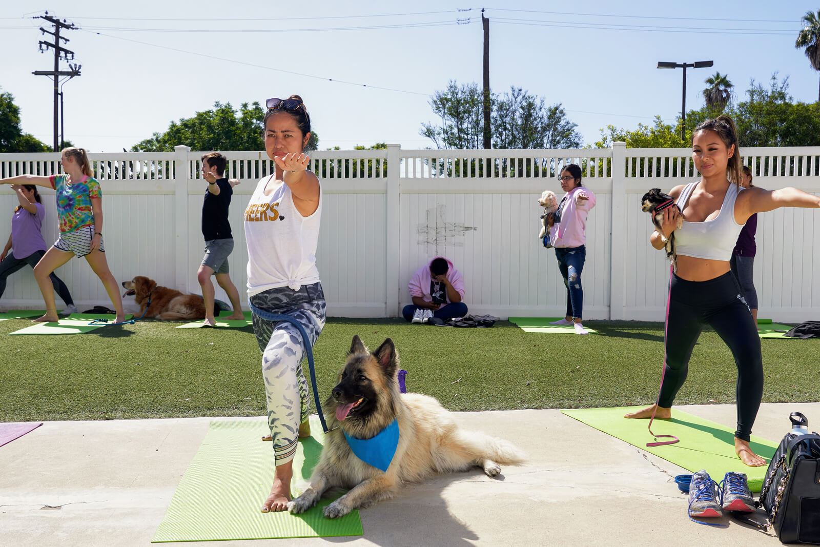 Dogs with people doing Yoga