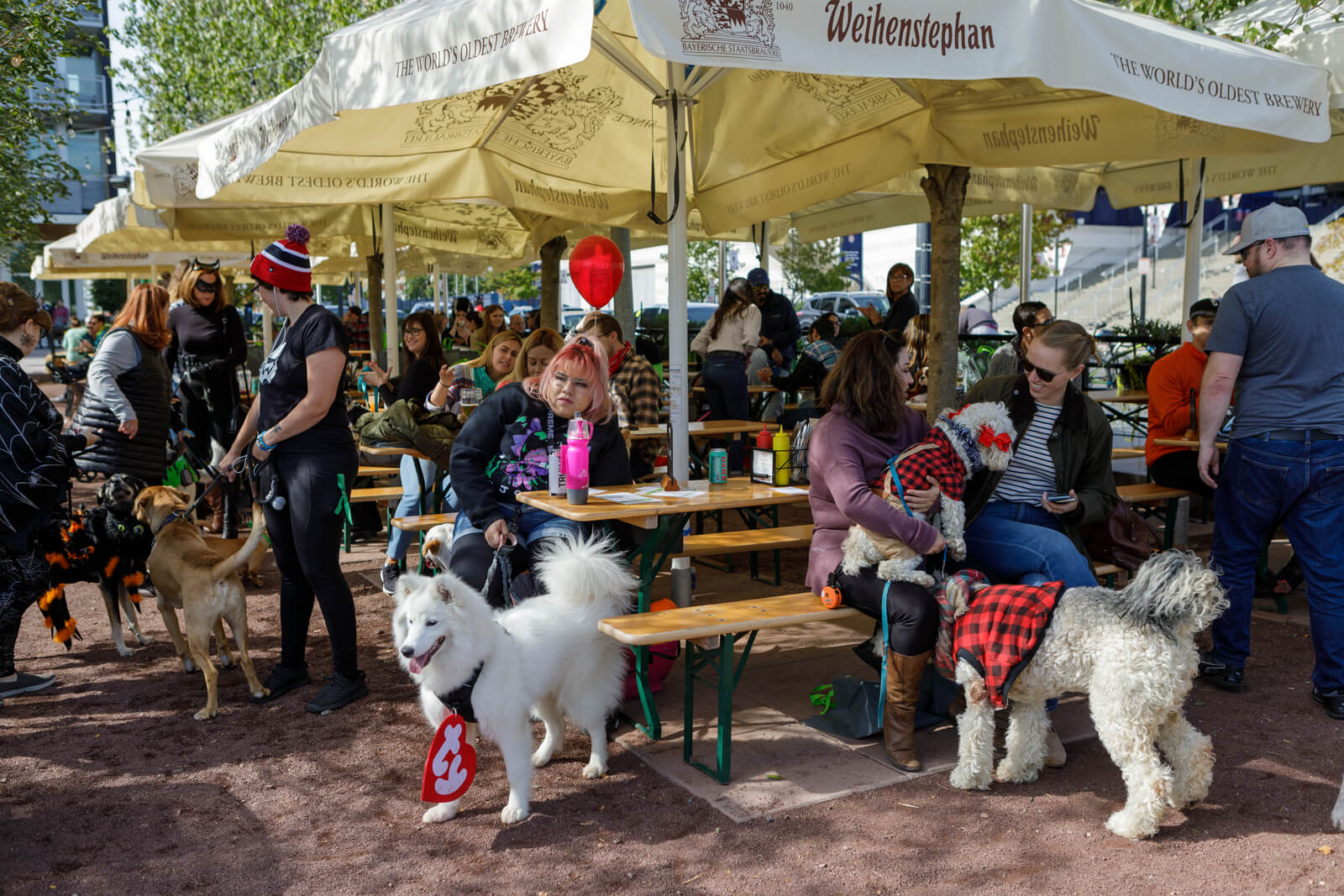 People and dogs at Halloween event