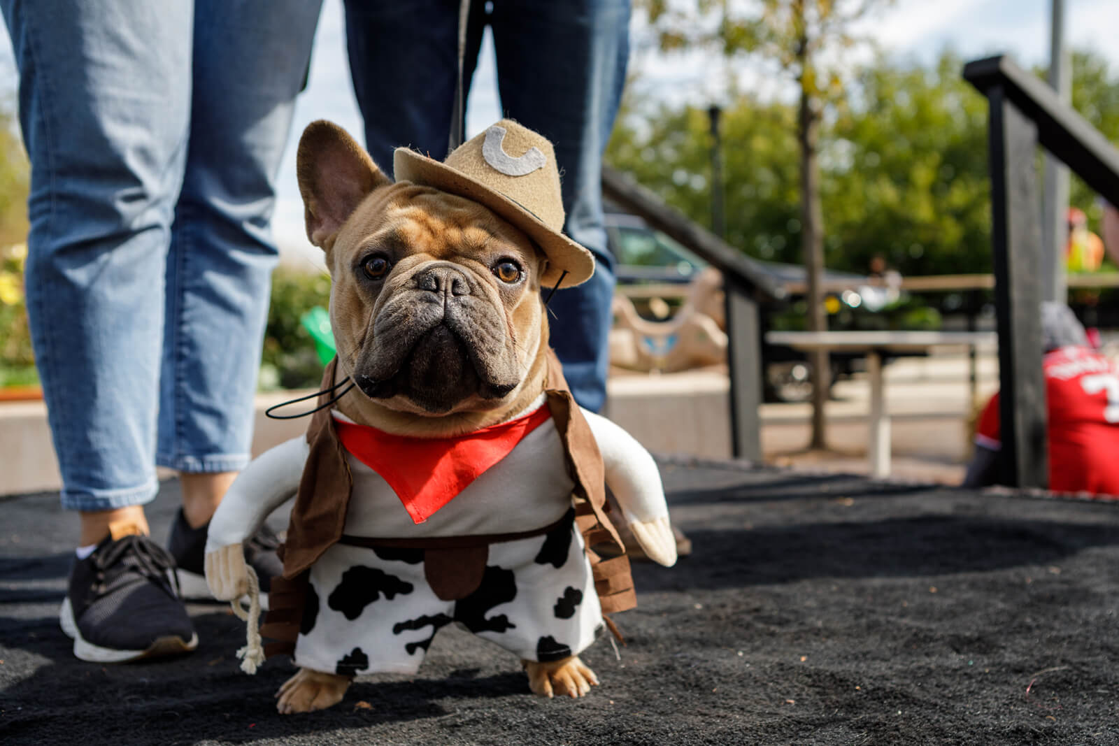 Dog dressed as cowboy at Halloween event
