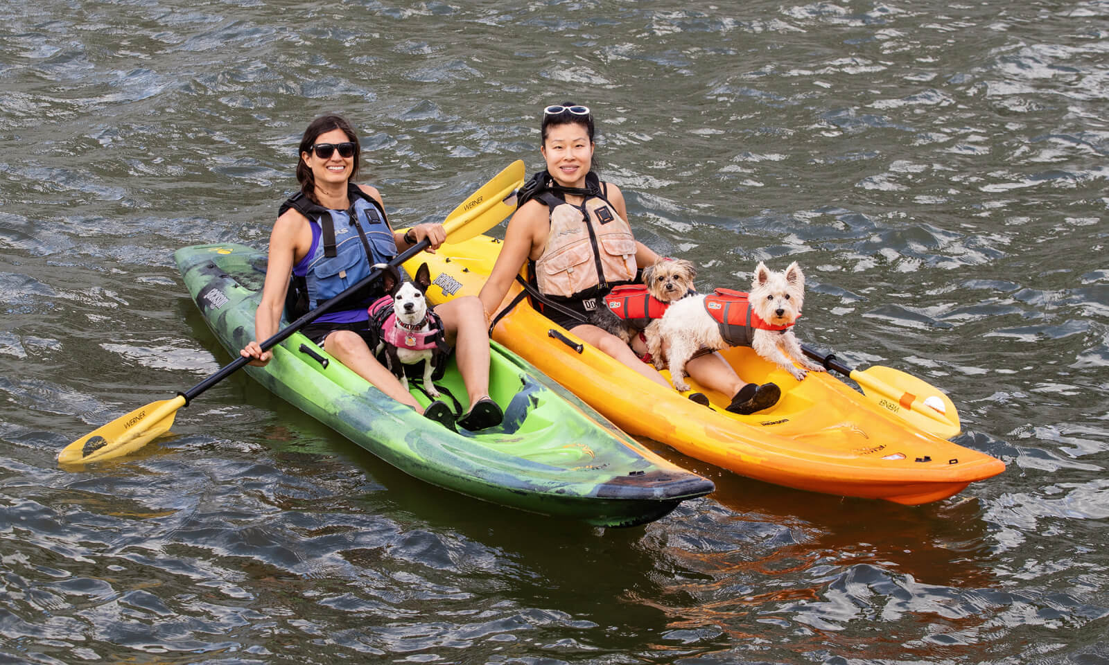Two people kayaking with 2 dogs