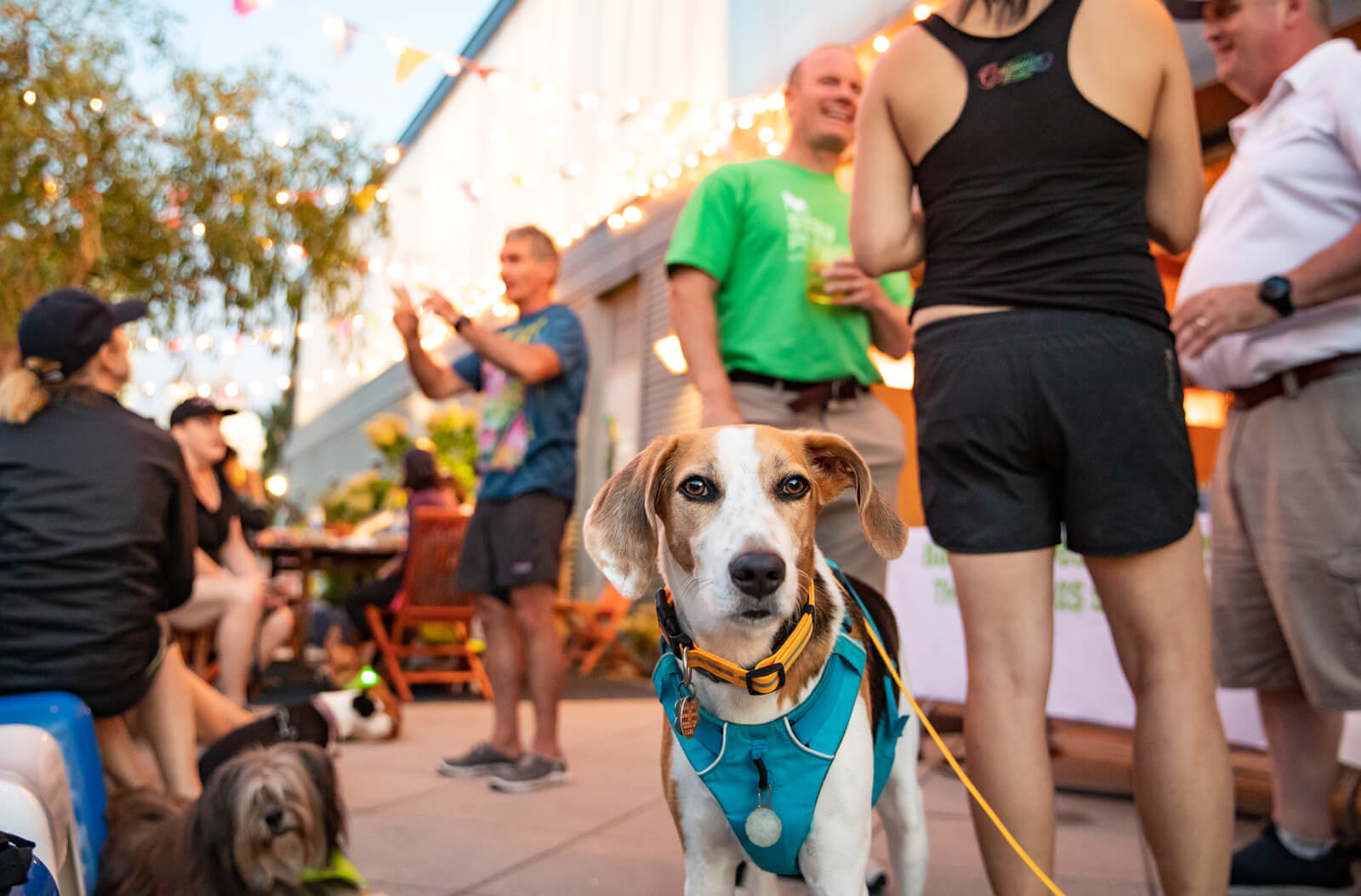 Dog with people in background at event