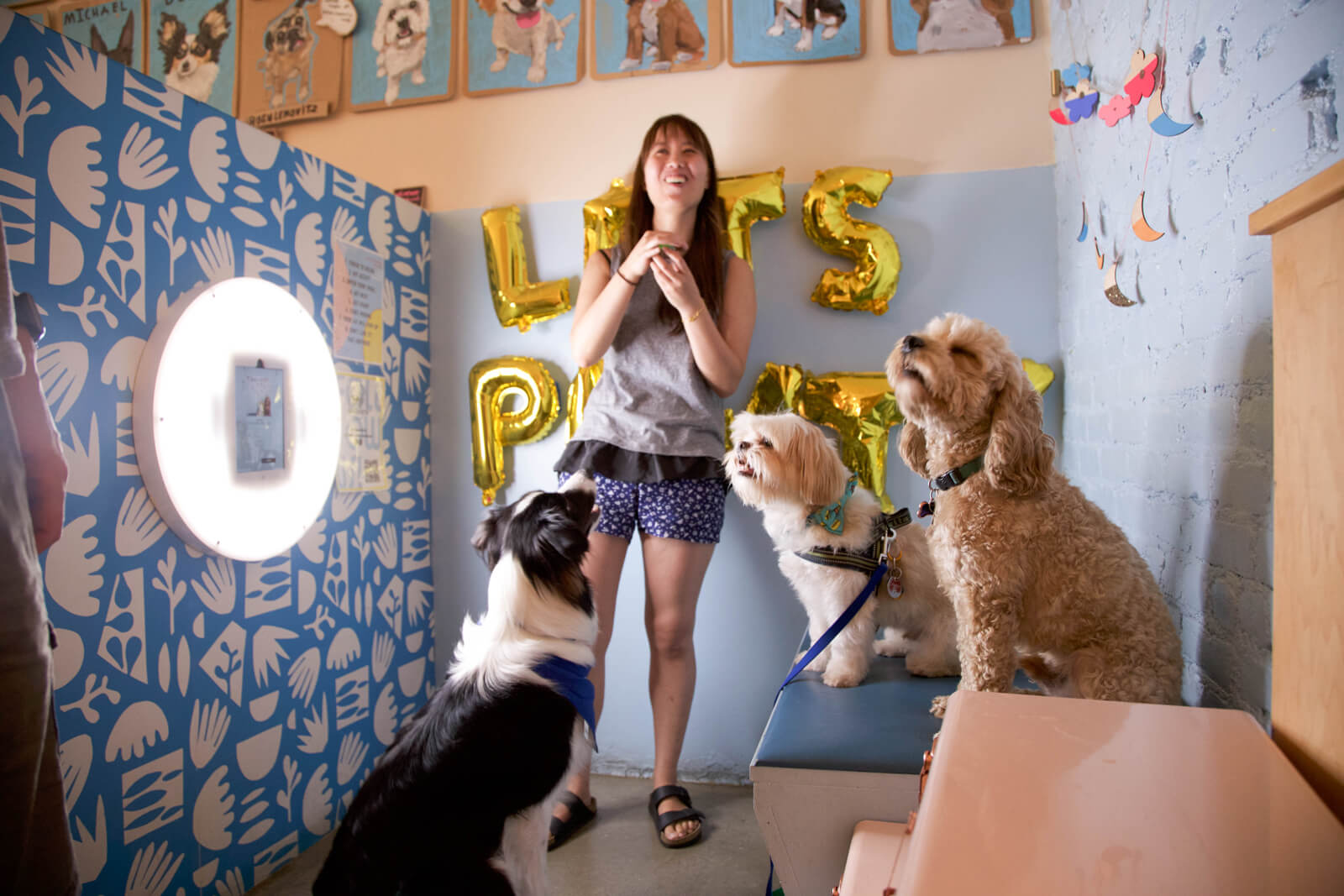 3 dogs getting staged photo taking