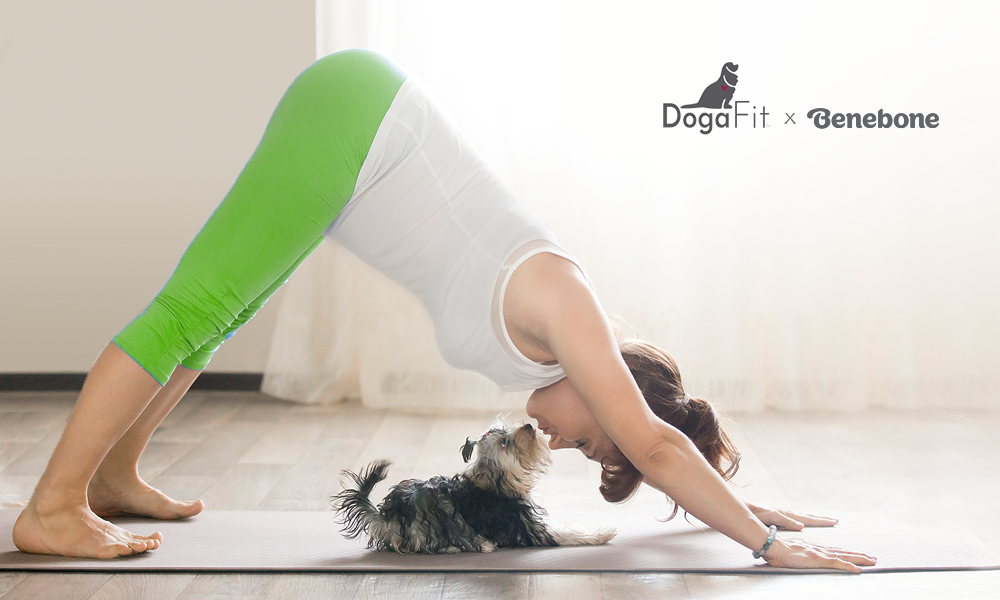 Dog Yoga with Benebone and DogaFit