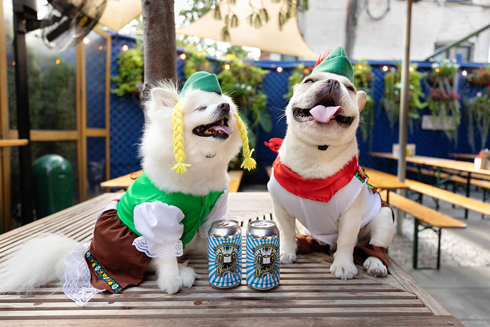 Dog's in Oktoberfest costumes