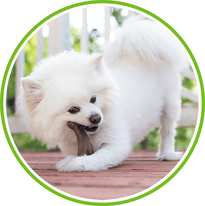 White dog with Benebone Wishbone