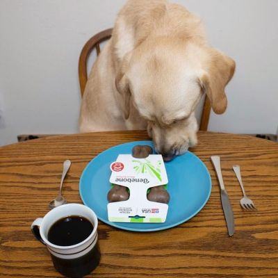 Dog with Benebone on plate and drink