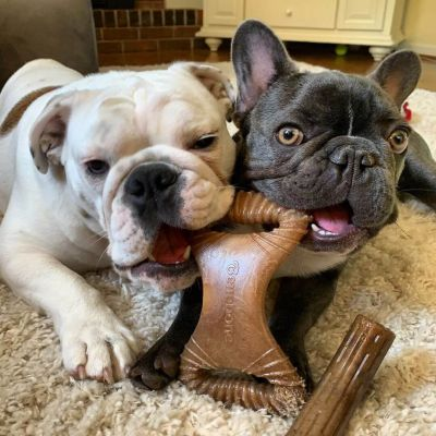 Dogs with Benebones