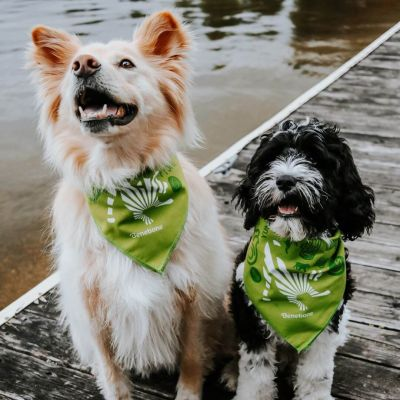 Two Dogs with Benebone handkerchiefs