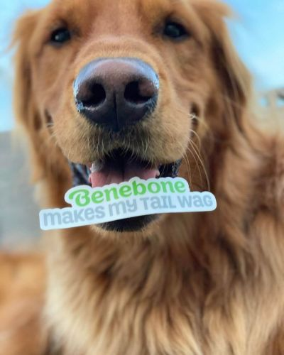Dog with Benebone sticker