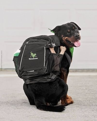 Dog with Benebone backpack