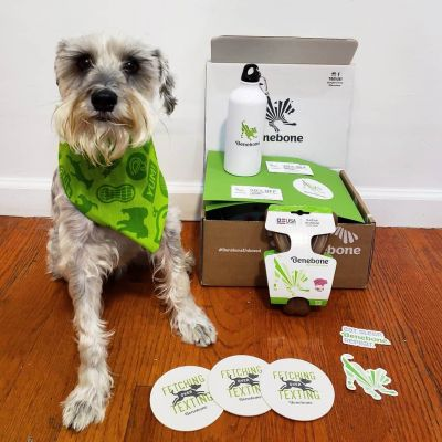 Dog with Benebone giftbox