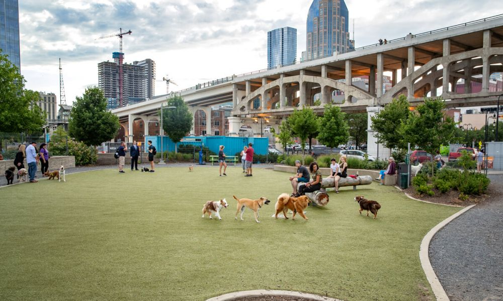 Dog park with people and dogs at Nashville TN